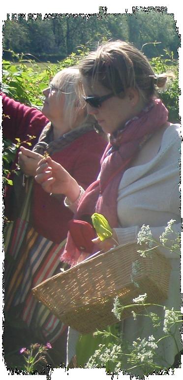 flore-gourmande-cueillette-plantes-sauvages-comestibles-présentation-01