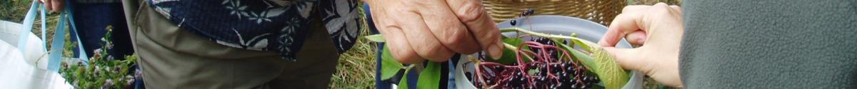 flore_gourmande_cueillette_plantes_sauvages_comestibles_activites_002