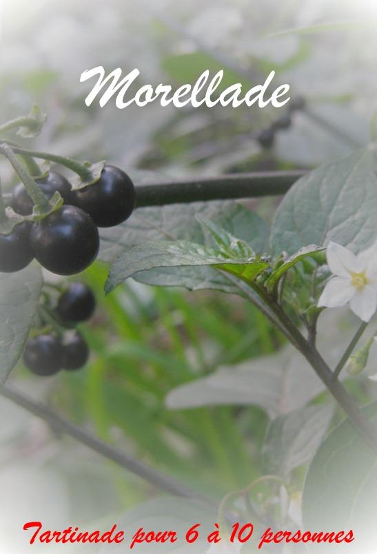 cueillette-plantes-sauvages-evenement-nord-pas-de-calais-sortie-famille-familiale-bio-nature-sauvag-recette-sante-001